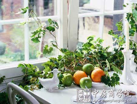 财位选用观叶类较茂盛,煞位摆放带刺植物破除煞气